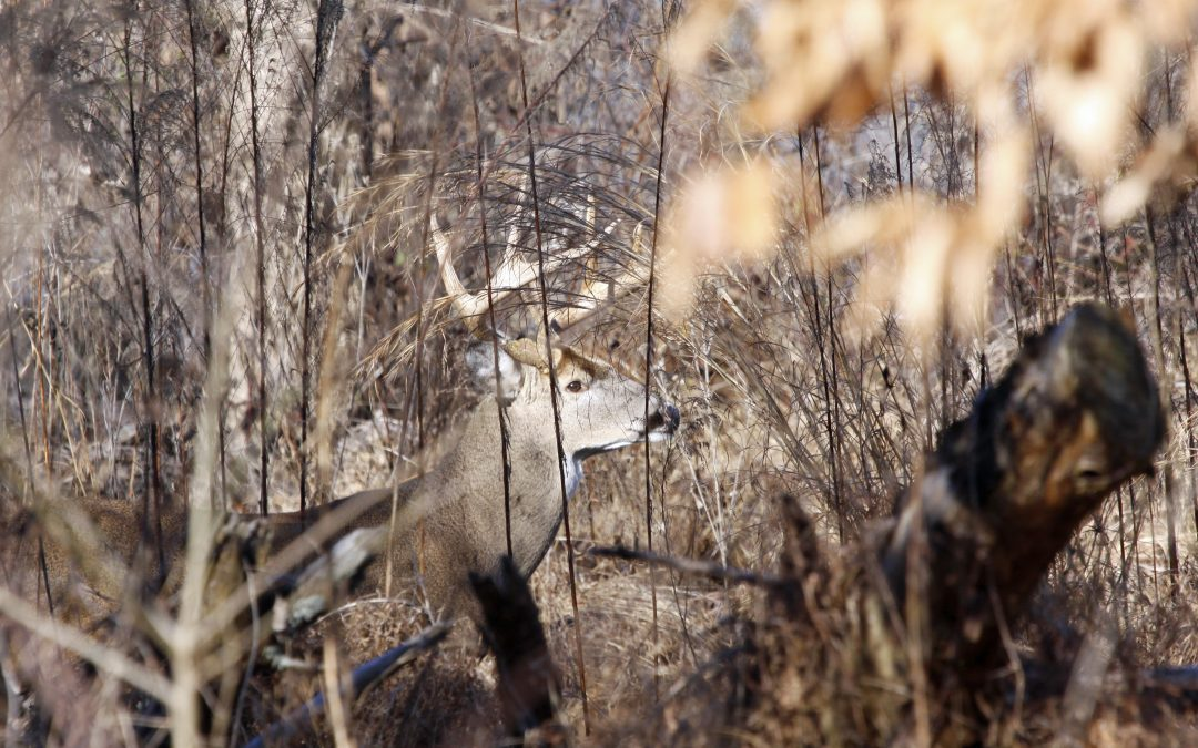 3 Ways to Improve Your Hunting Land for Deer