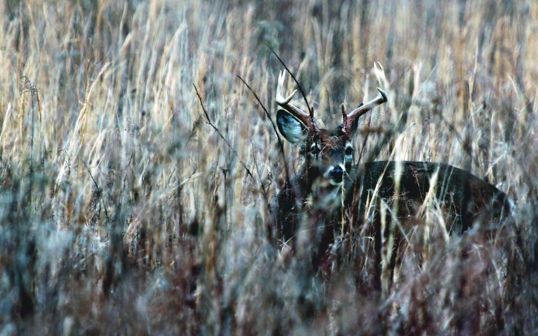 Best Time to Hunt Deer? Don't Forget About Lunch