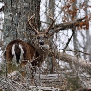 Finding Deer Hunting Hotspots on Public Land