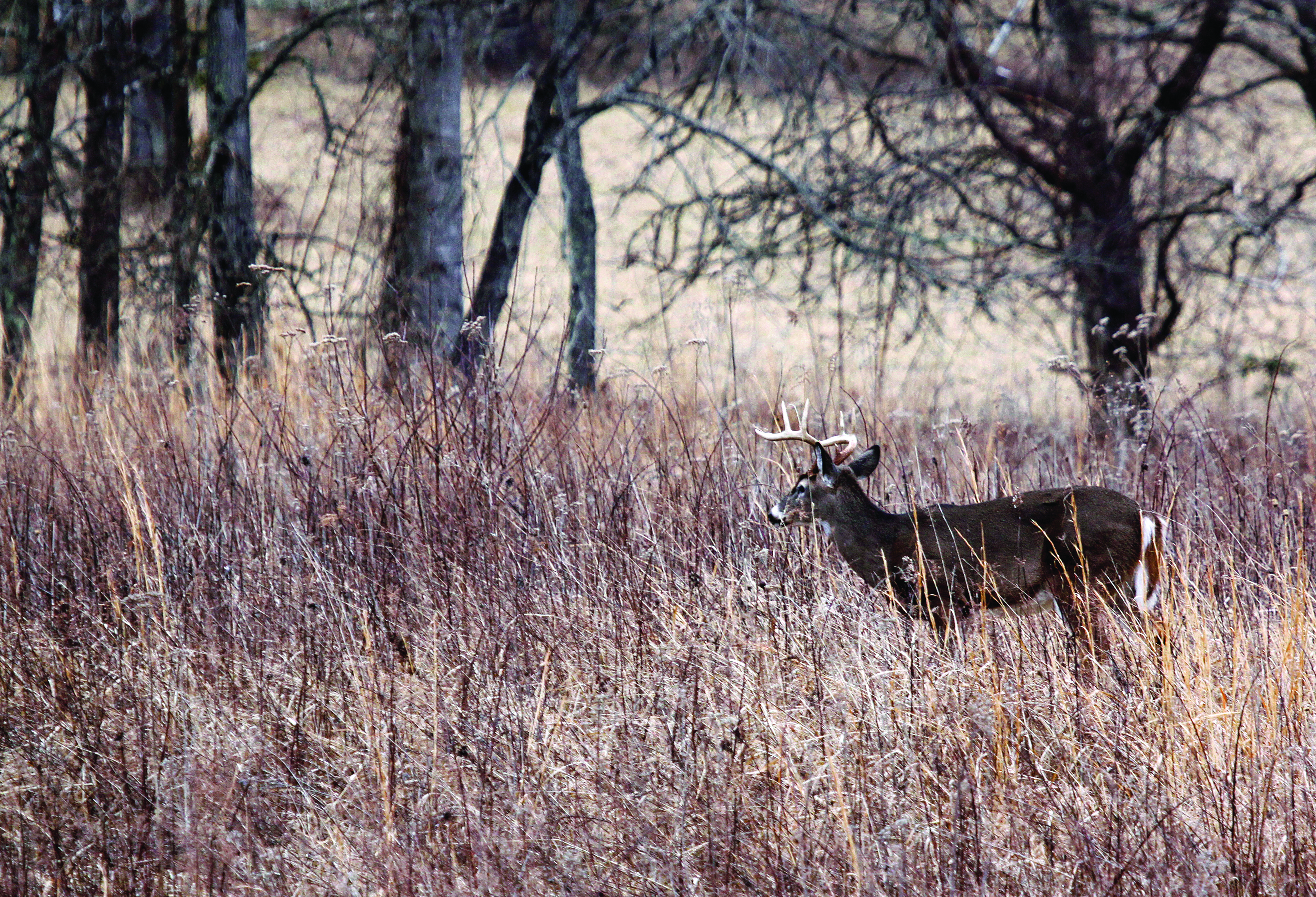 When hunting the rut, look for does. Bucks will be following them throughout the day.