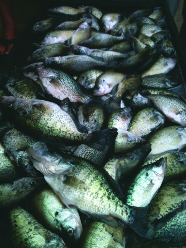 Fishing for crappie with Captain Lee always seems like a good idea with the tremendous success he has.