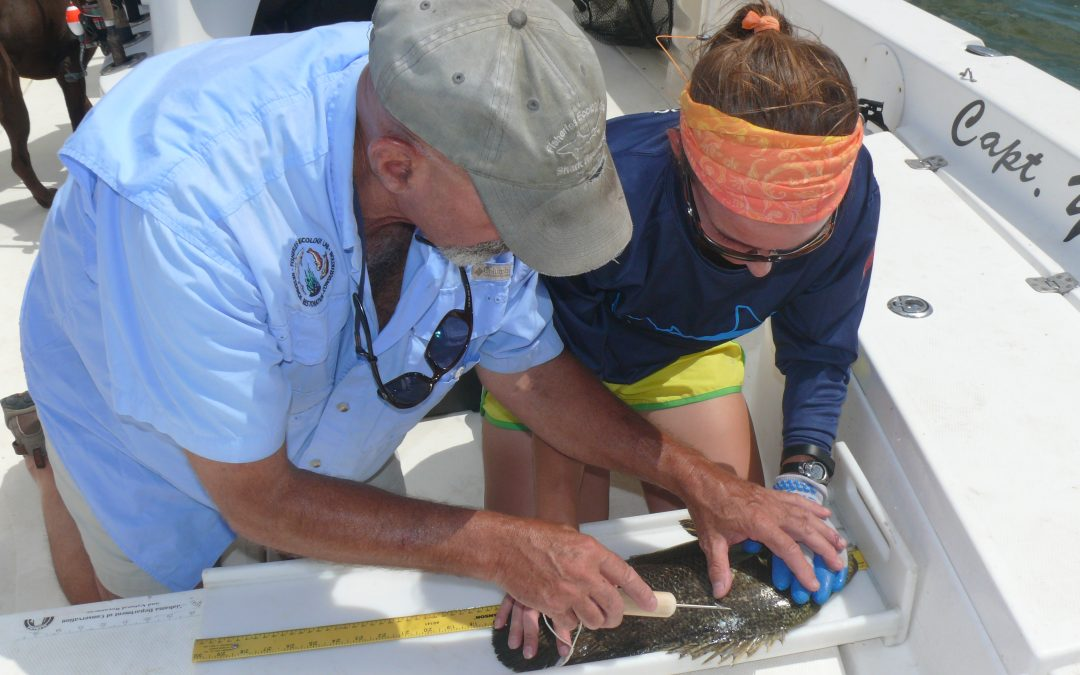 Fishing for Knowledge at Dauphin Island