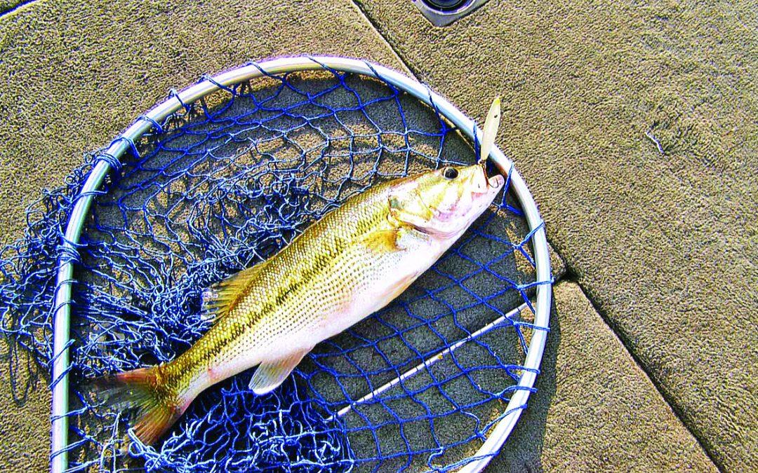 Fishing Lake Martin in the Winter