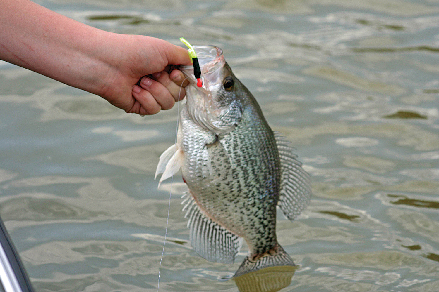 Secrets to january crappie fishing great days outdoors for Pictures of crappie fish