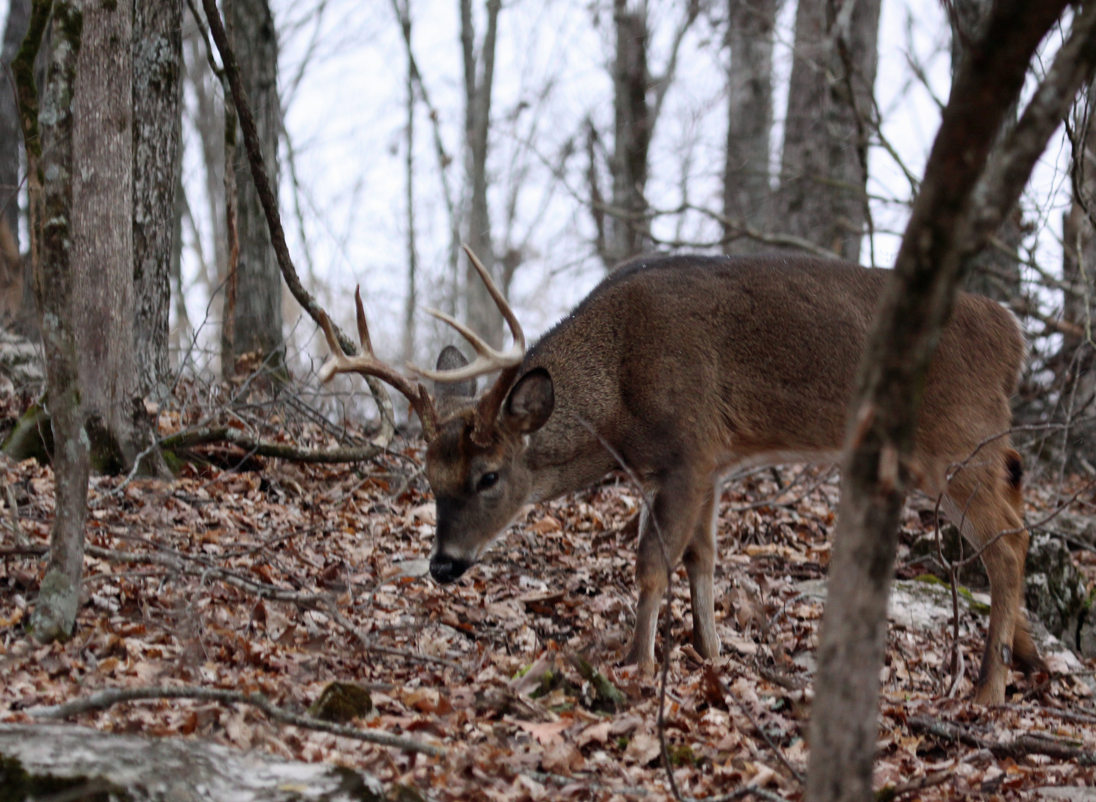 Find some remaining acorns to have success deer hunting late in the season.