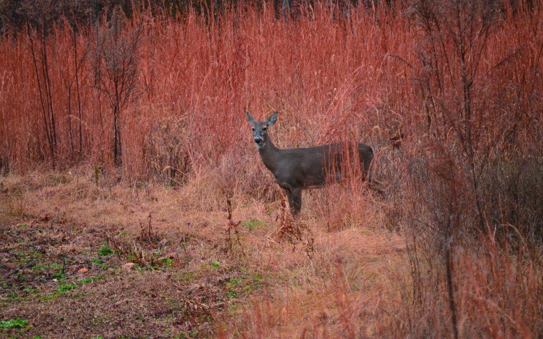 Creating Screening Cover for Deer