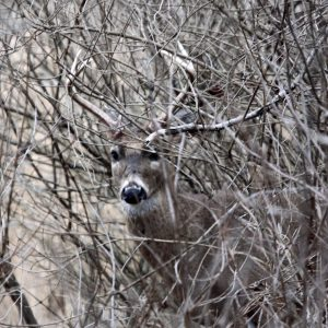 Discover Hidden Bucks and How to Take Them