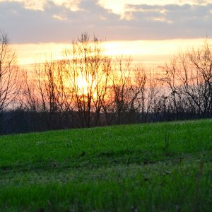Planting Food Plots for Deer