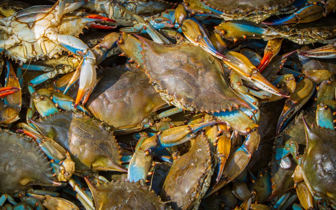 Blue Crabs — A Delicious Resource