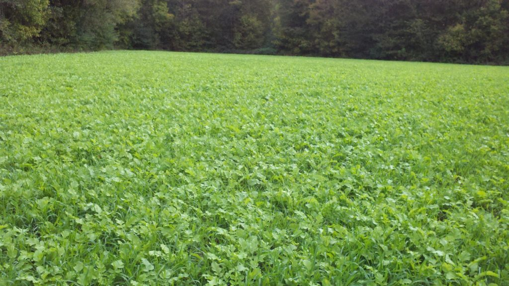 Alabama Blend Deer Food Plot Seed