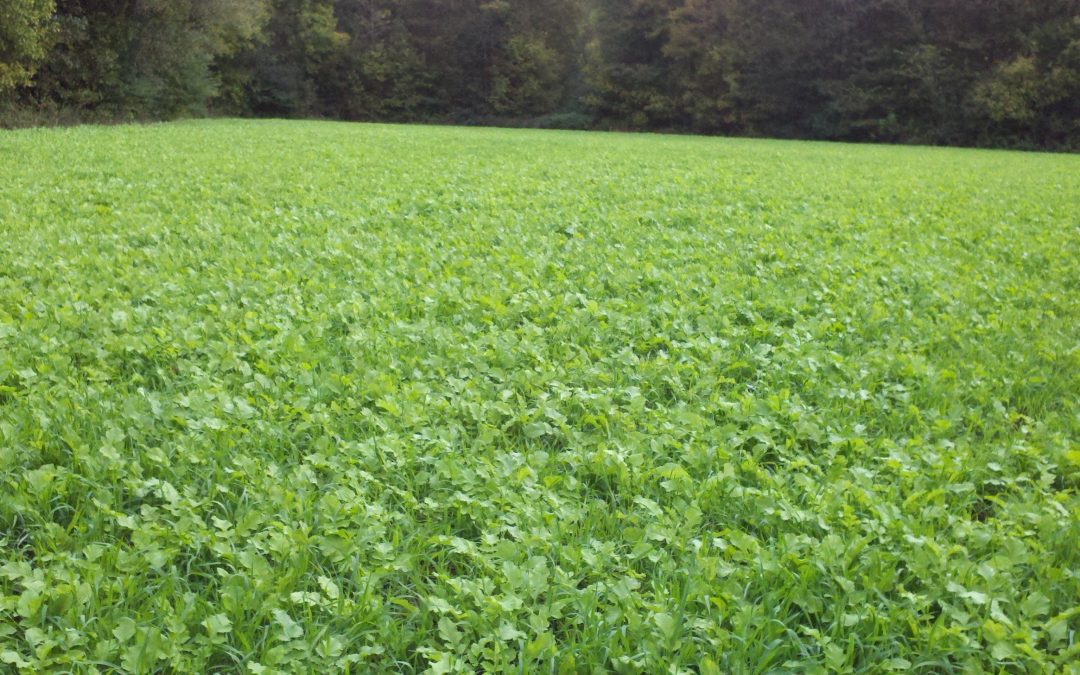 Deer Food Plot Seed [In The South]
