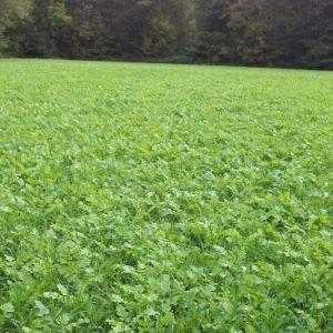 Deer Food Plot Seed [In The South]