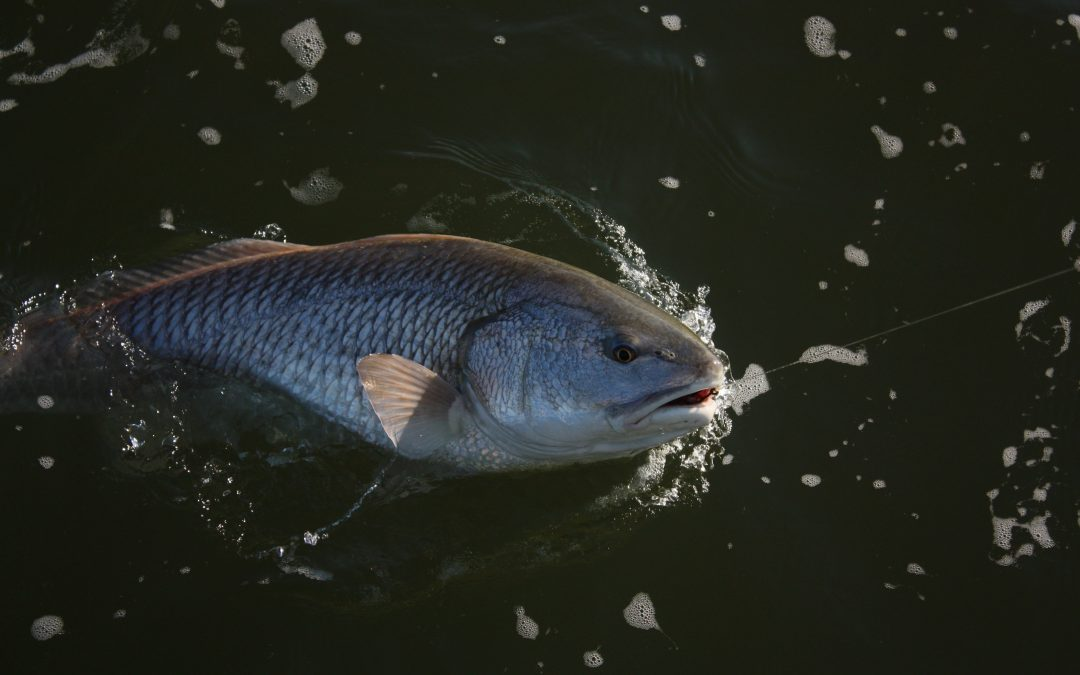 Fall Bull Red Fishing: What A Time!