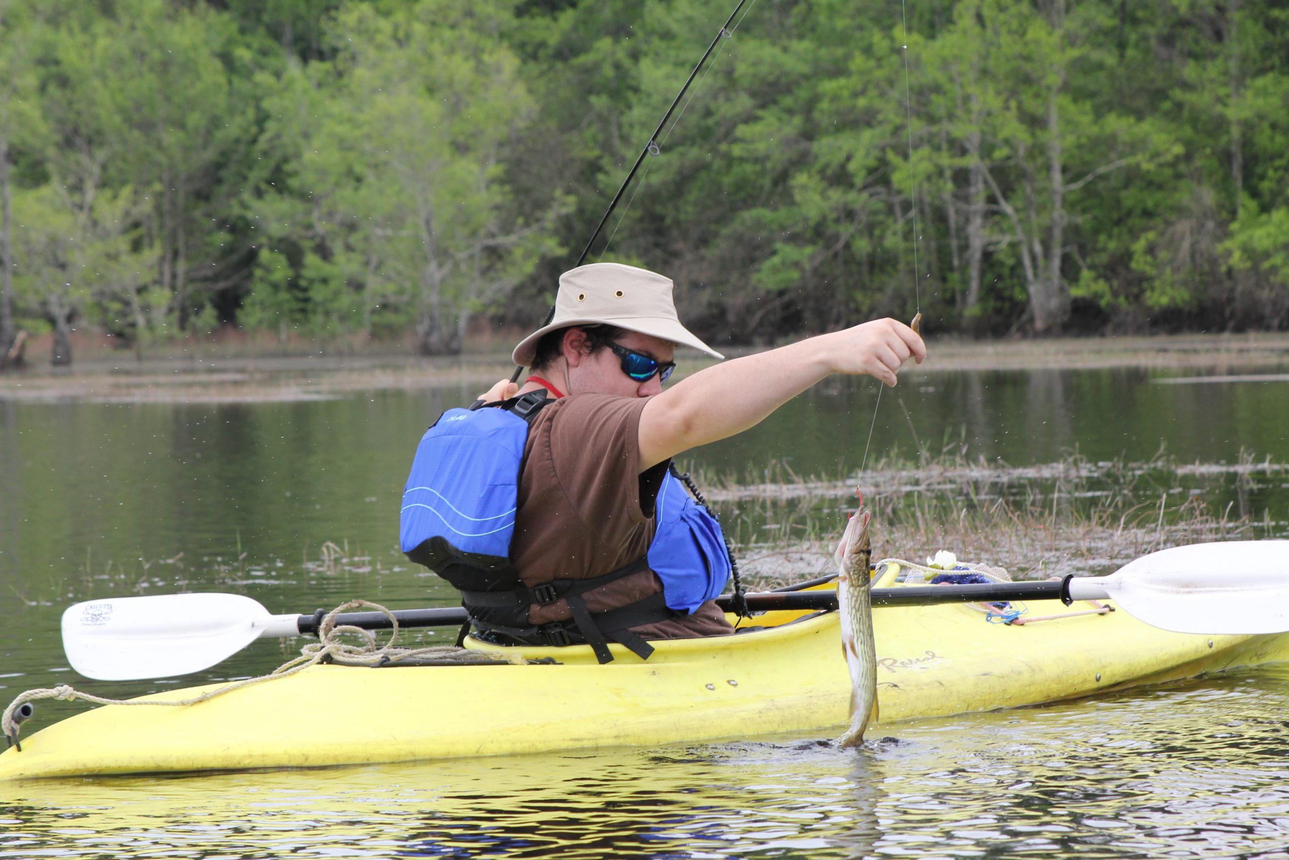 chain pickerel fish