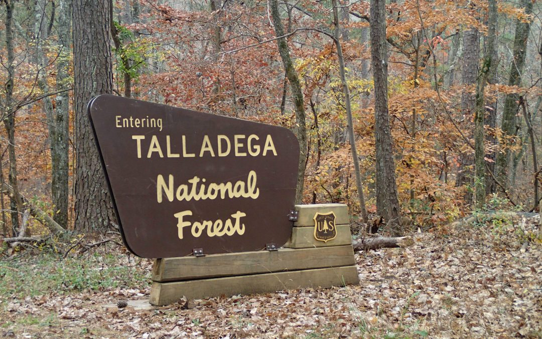 Talladega National Forest Deer Hunting