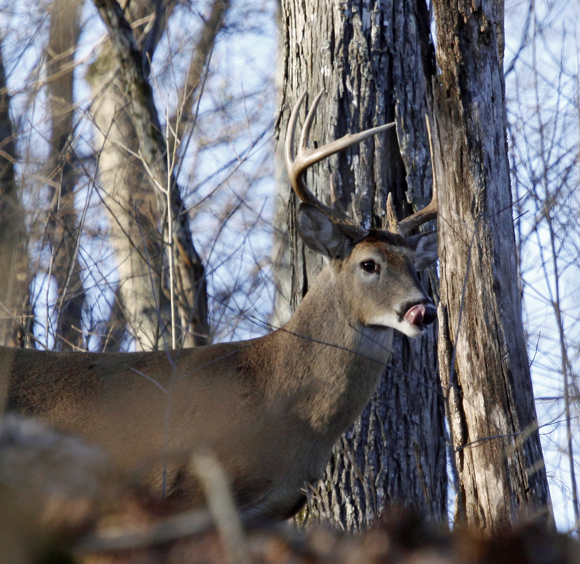 hunting lease insurance