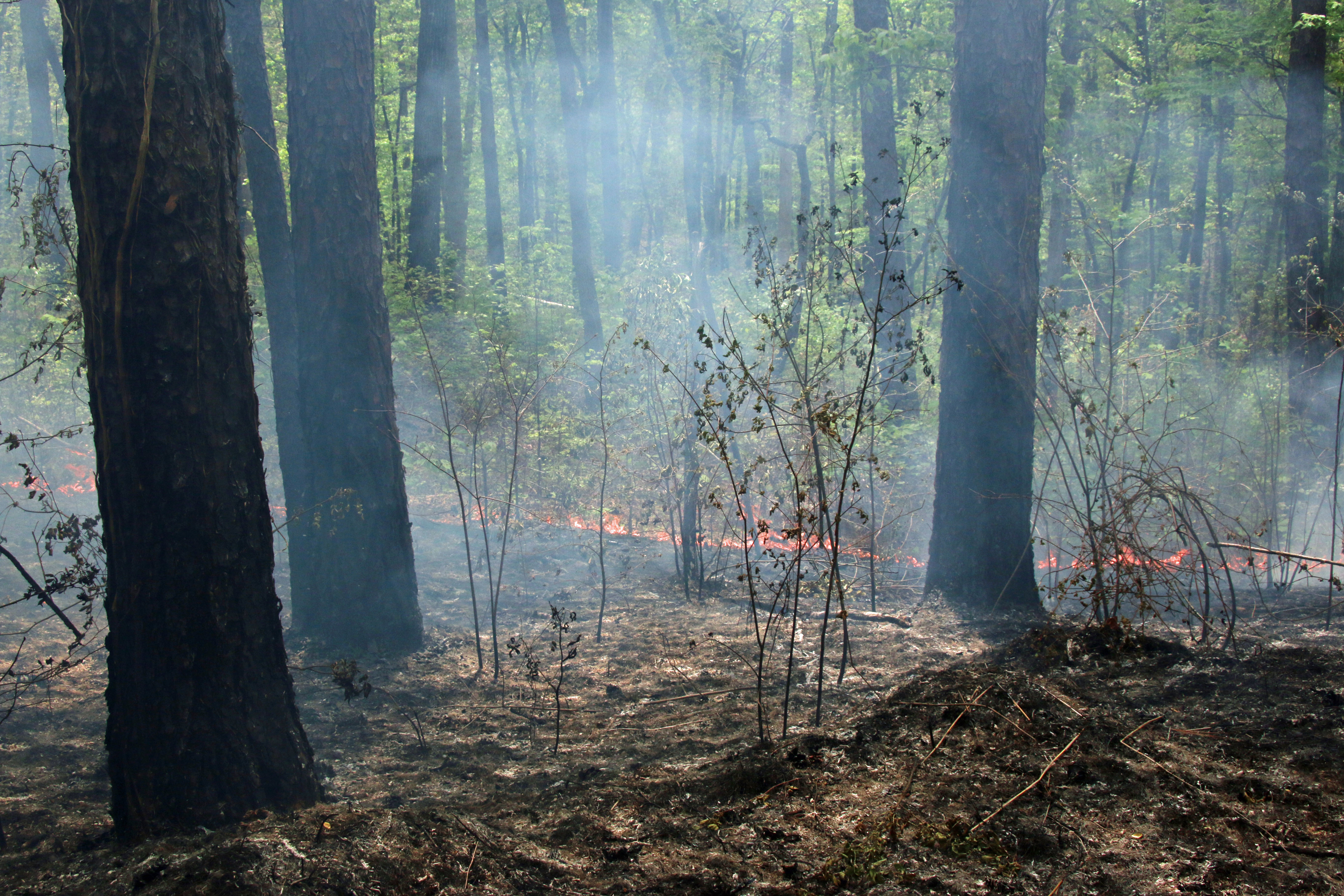 Over the years, part of land management in the Talladega National Forest has been controlled burns.