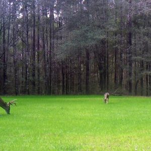 Food Plot Fertilizer – Liquid vs. Granular Fertilizer