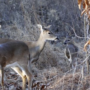 4 Tactics for Late Season Deer Hunting