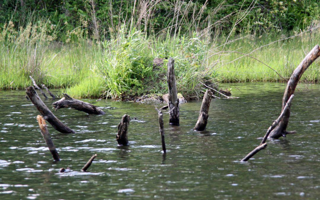 Fish Attractors and Habitats: Simple DIY Ideas