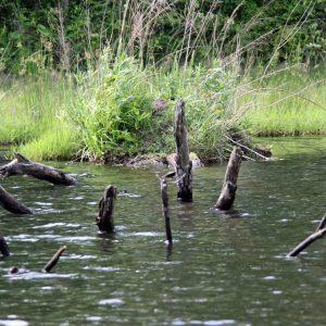 Fish Attractors: Creating the Best Fish Habitat for Ponds