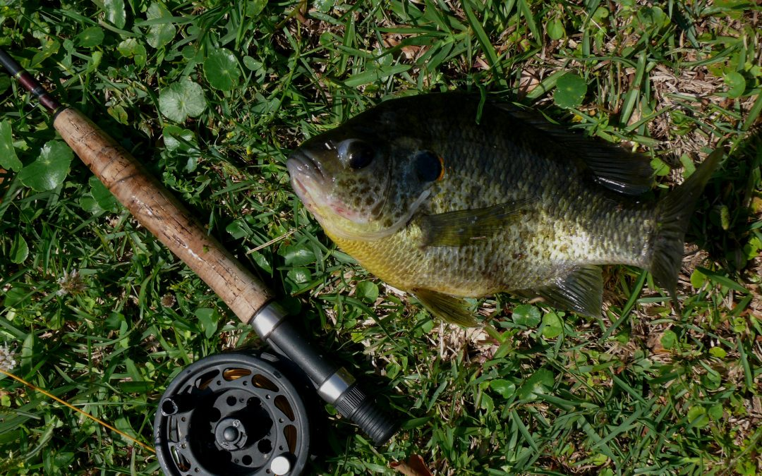 Early Spring Bream Fishing