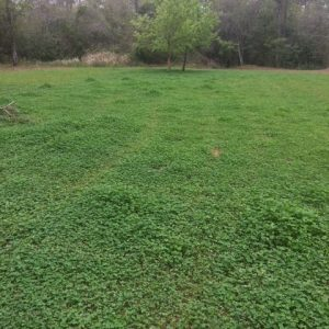 Start Your Preparations for Spring Food Plots