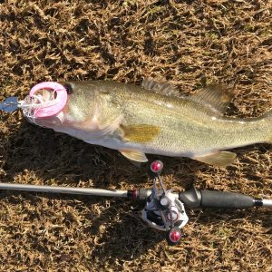 Pork Rind Fishing Tips that Promise Angling Action