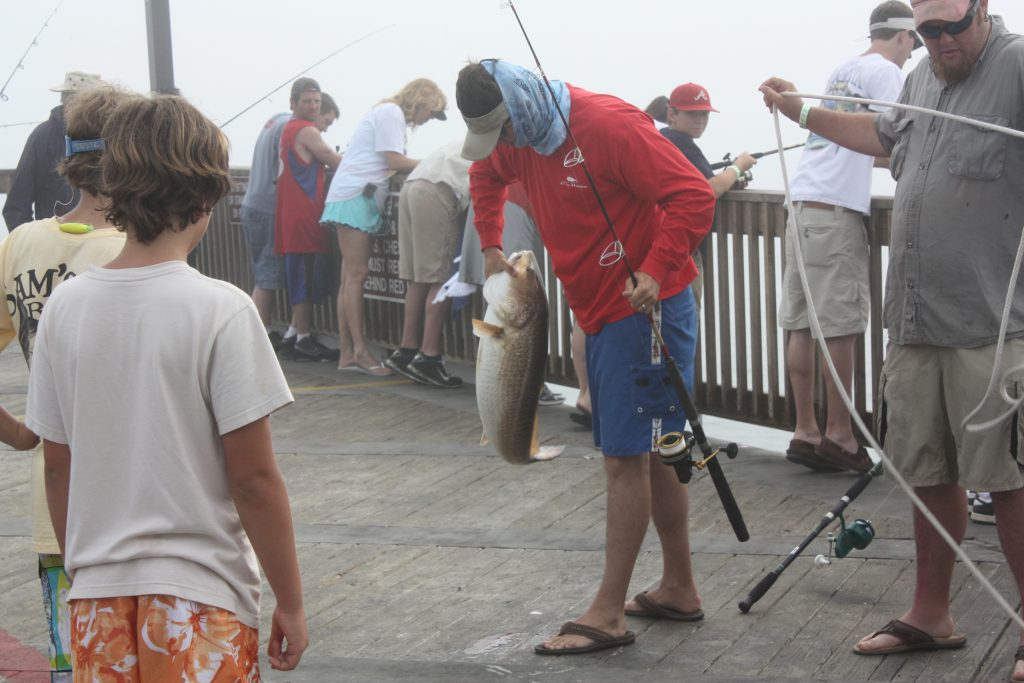 Big redfish are very commonly caught from the State Park fishing pier