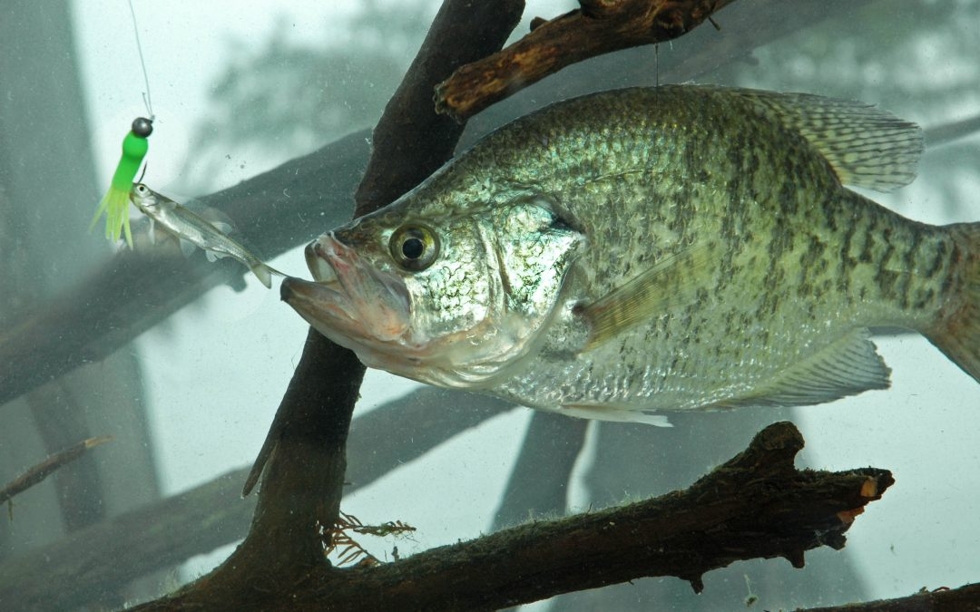 Crappie Fishing Tips From the Masters