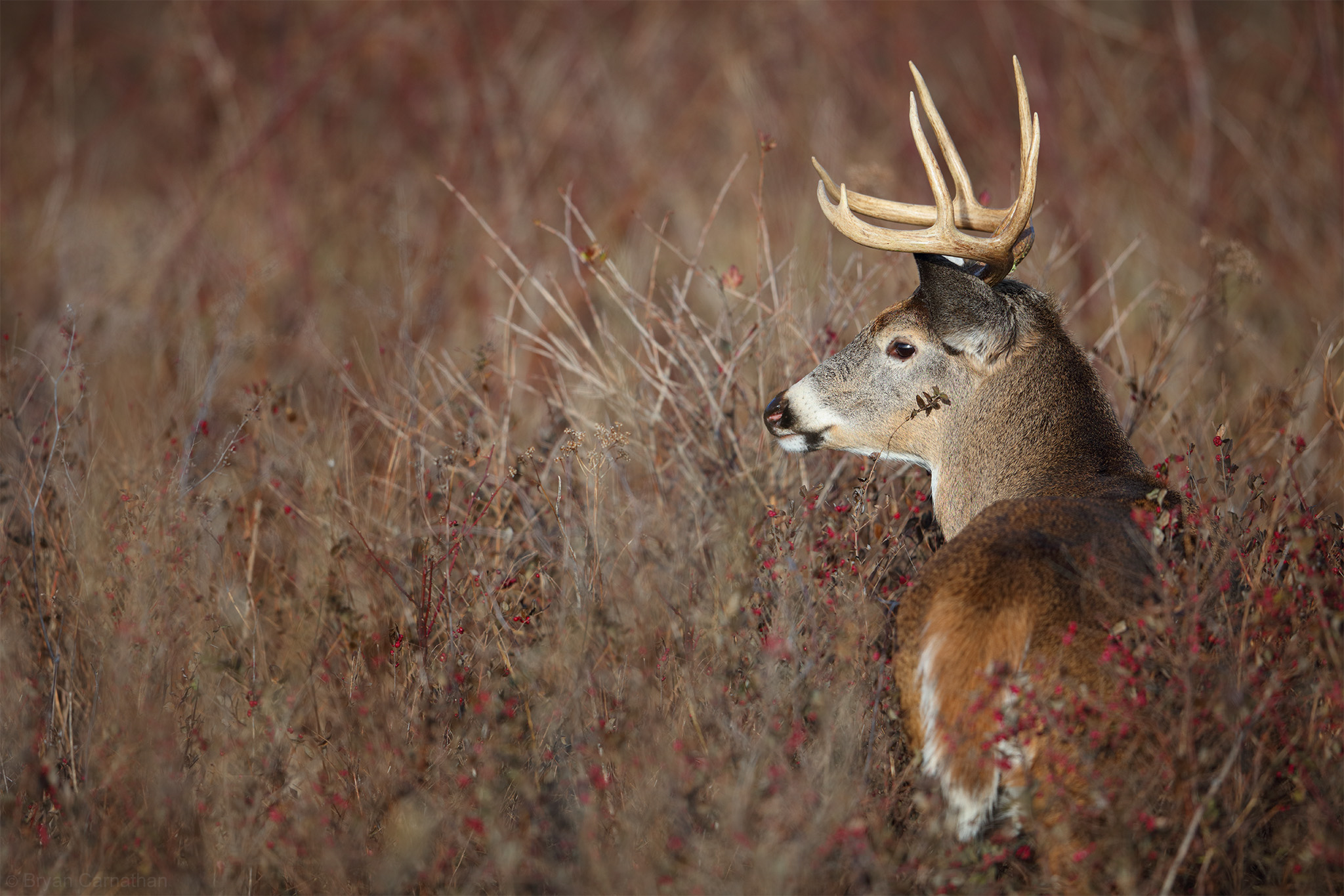 affordable whitetail hunting trips can be had for less than a club membership