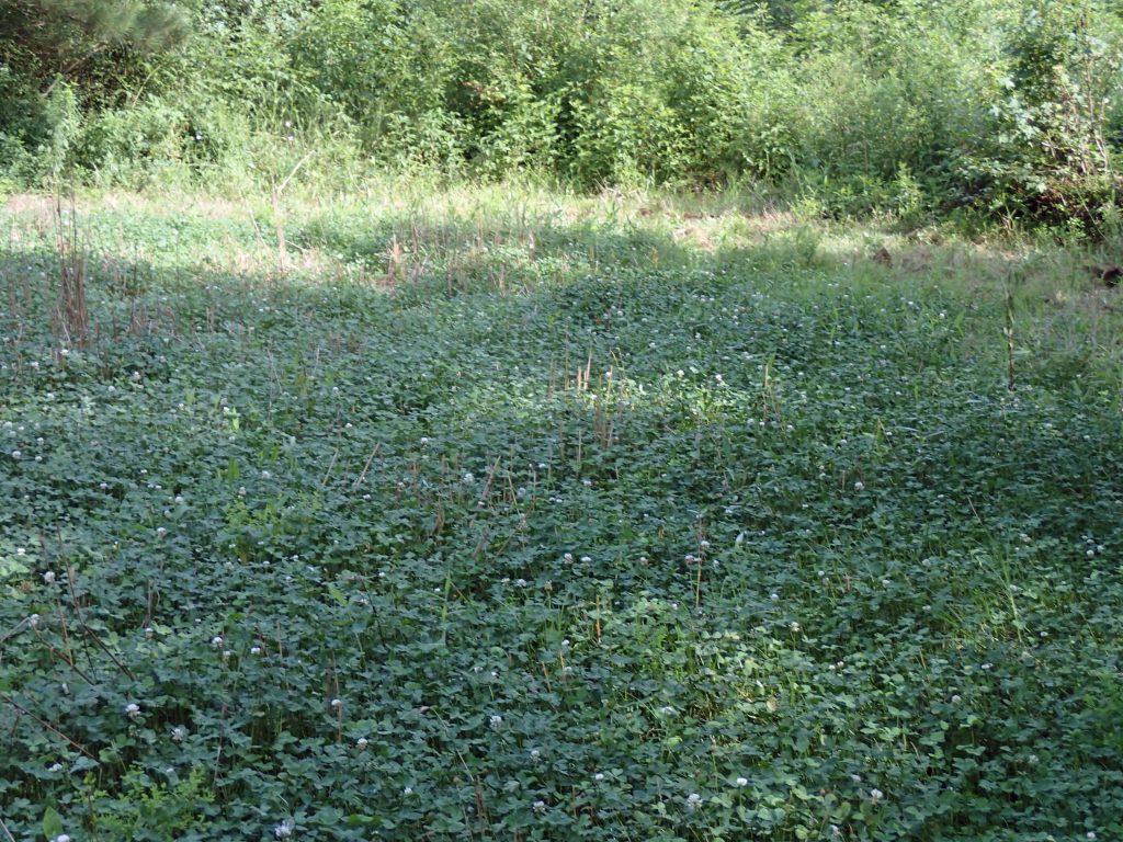clover plot