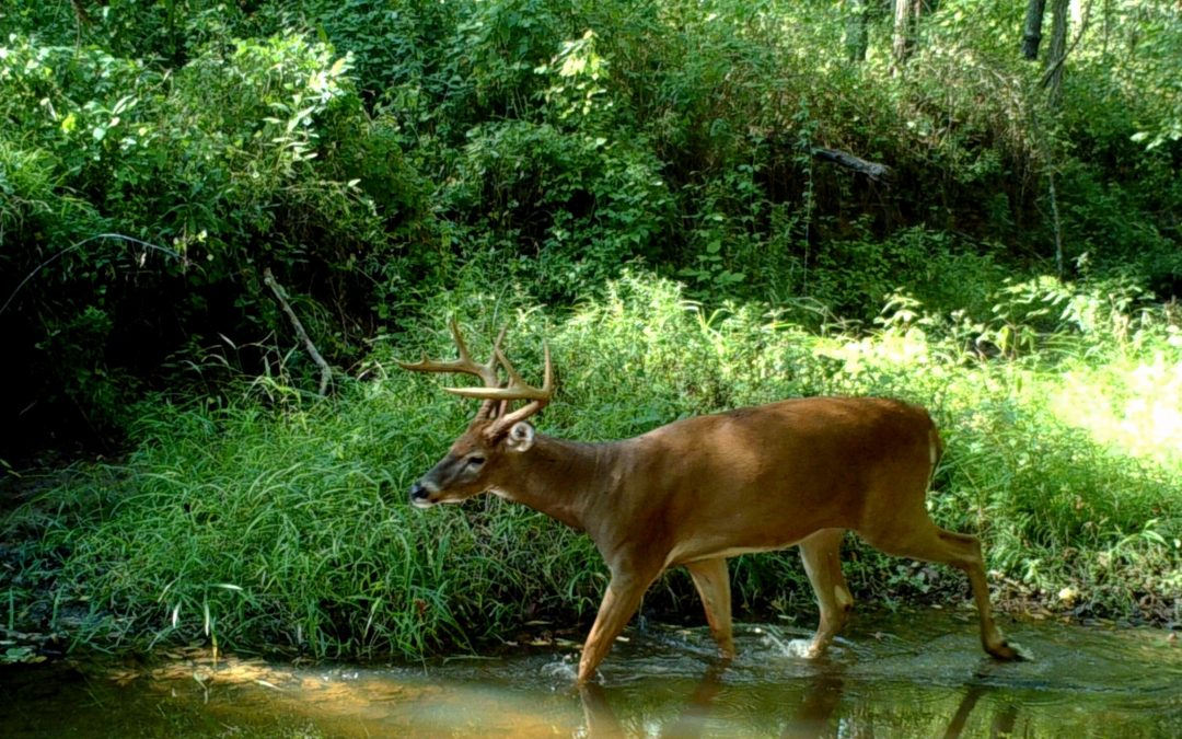 Alabama Trespassing Laws Favor Politics over Hunting on Private Property