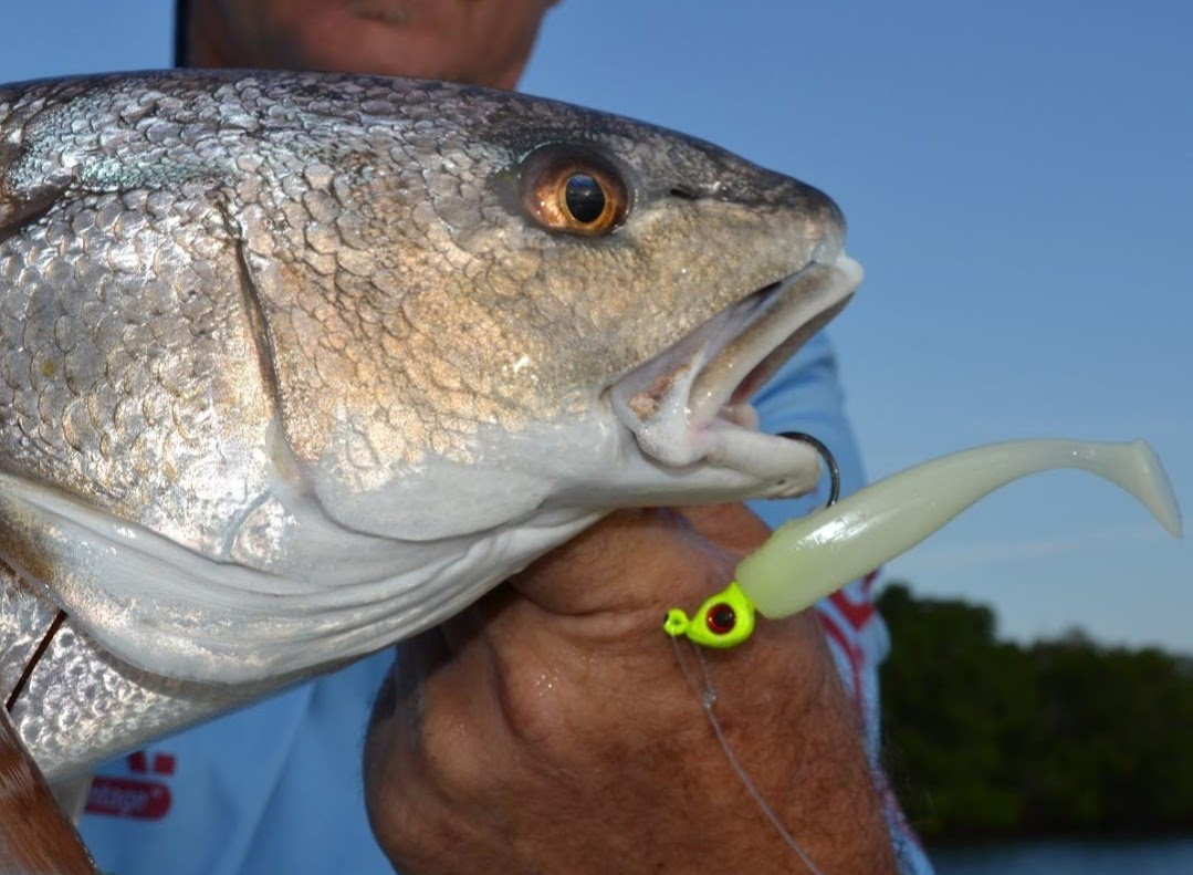 redfish with jig