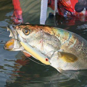 Chandeleur Islands Fishing: A Crowd Pleaser