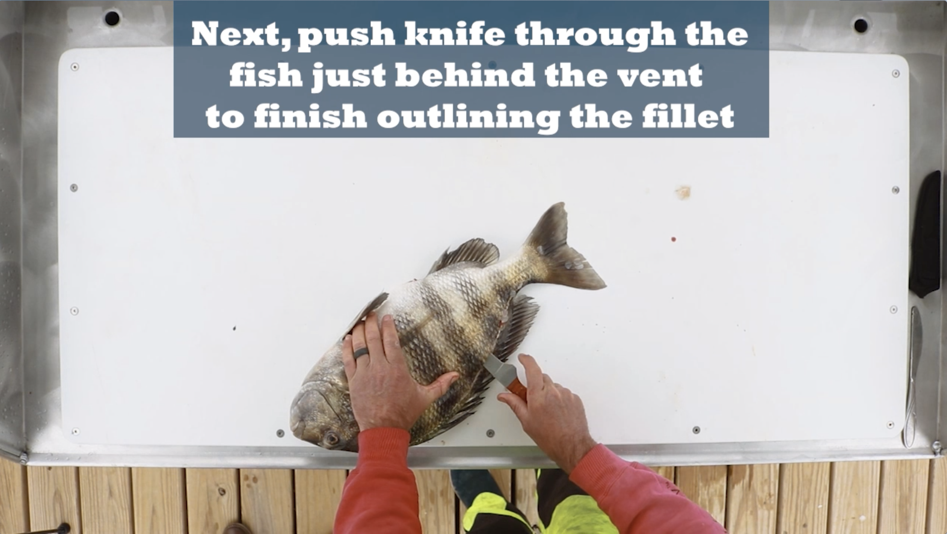 how to fillet a sheepshead step 4
