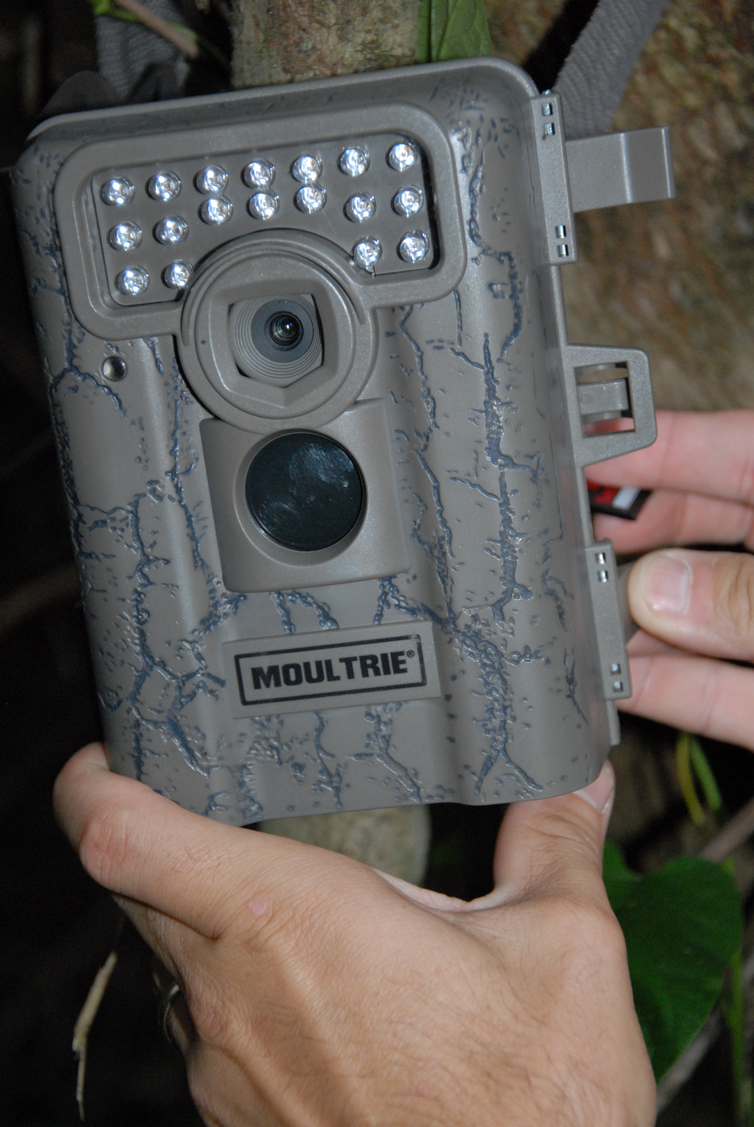 motion-sensor camera