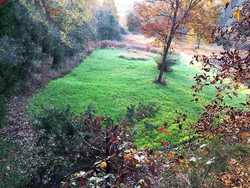 planting food plots in the deer