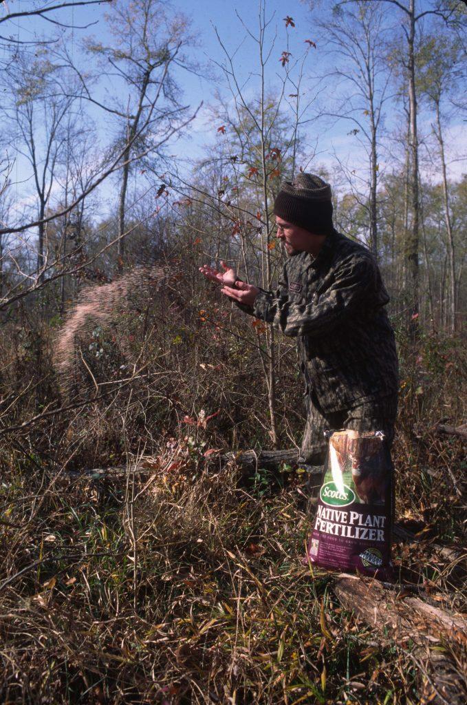 food plots for deer in the woods
