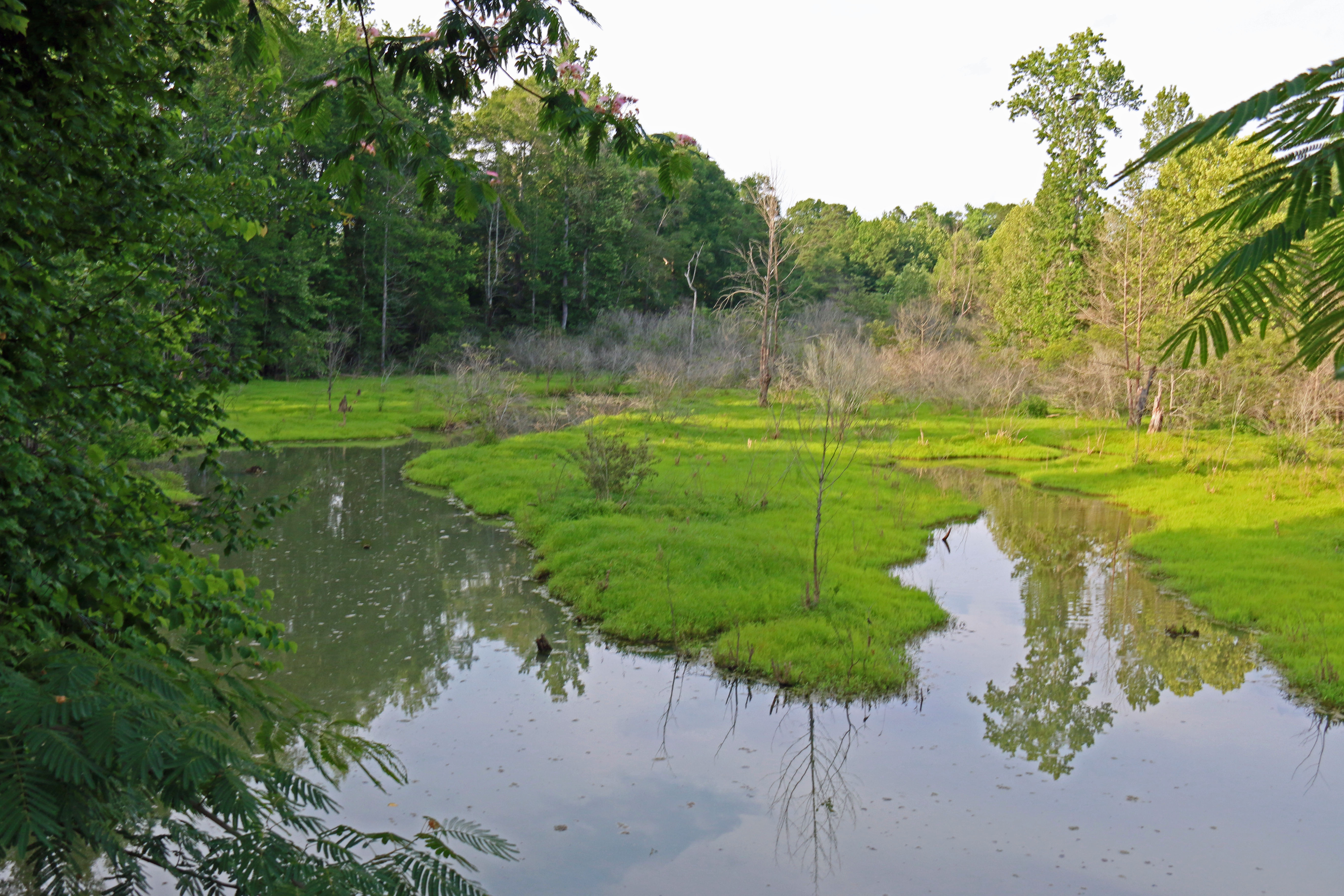 wetland creation creating duck hunting habitat with moist-soil