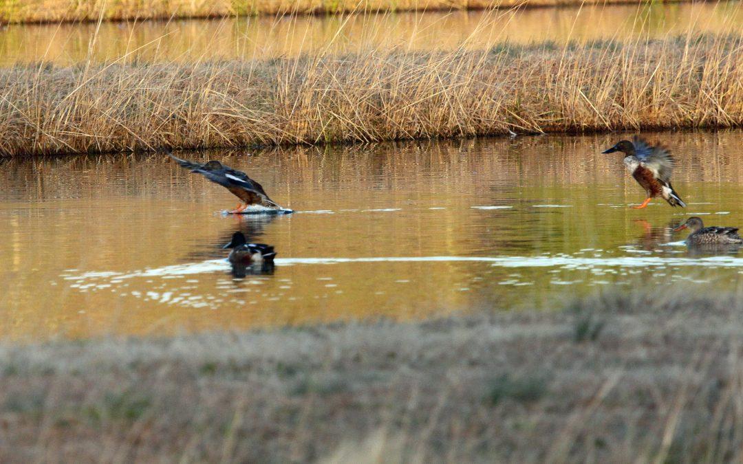 Wetland Creation – Creating Duck Hunting Habitat