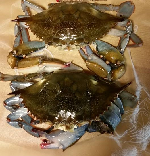 soft shell blue crab