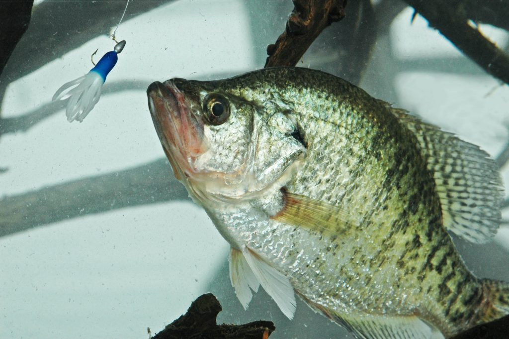 plastic jig for crappie
