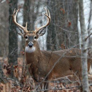 Alabama WMA Hunting on a Budget