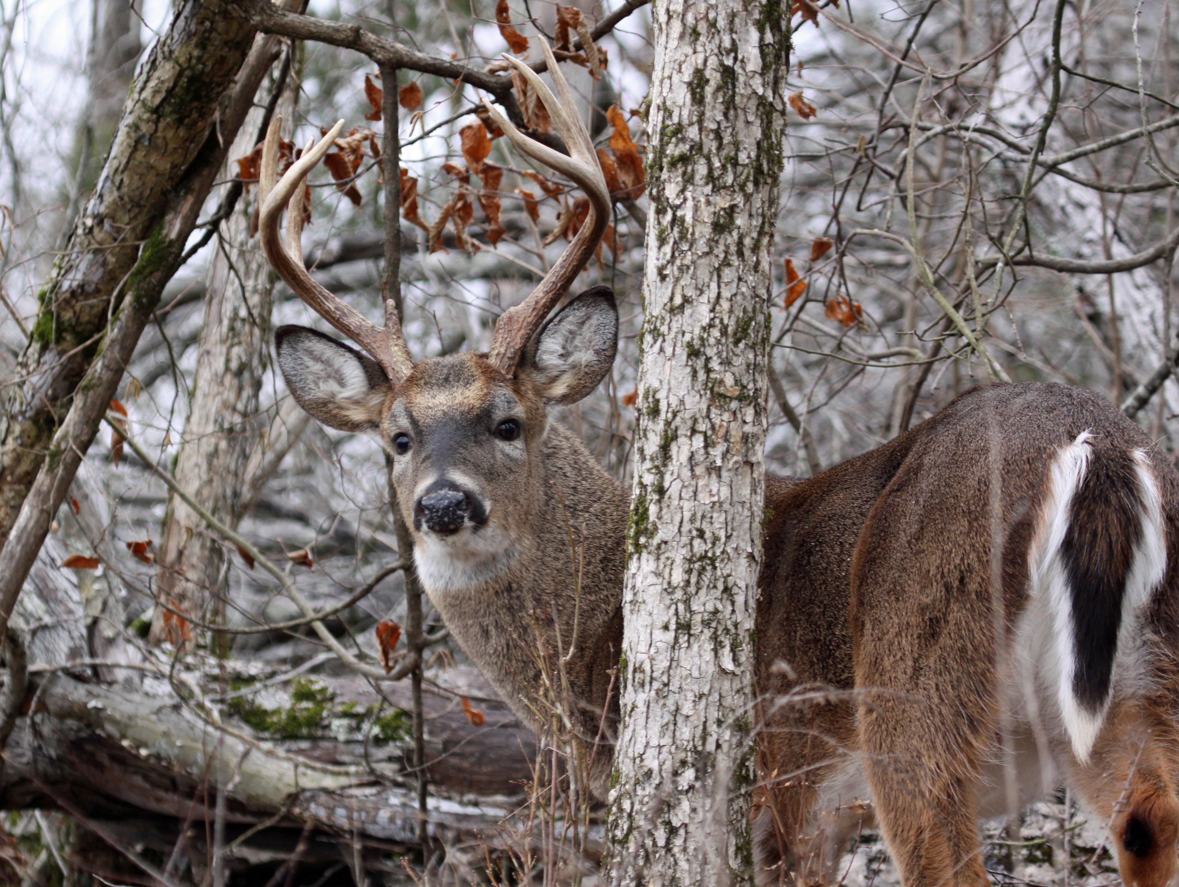 Alabama wildlife management area