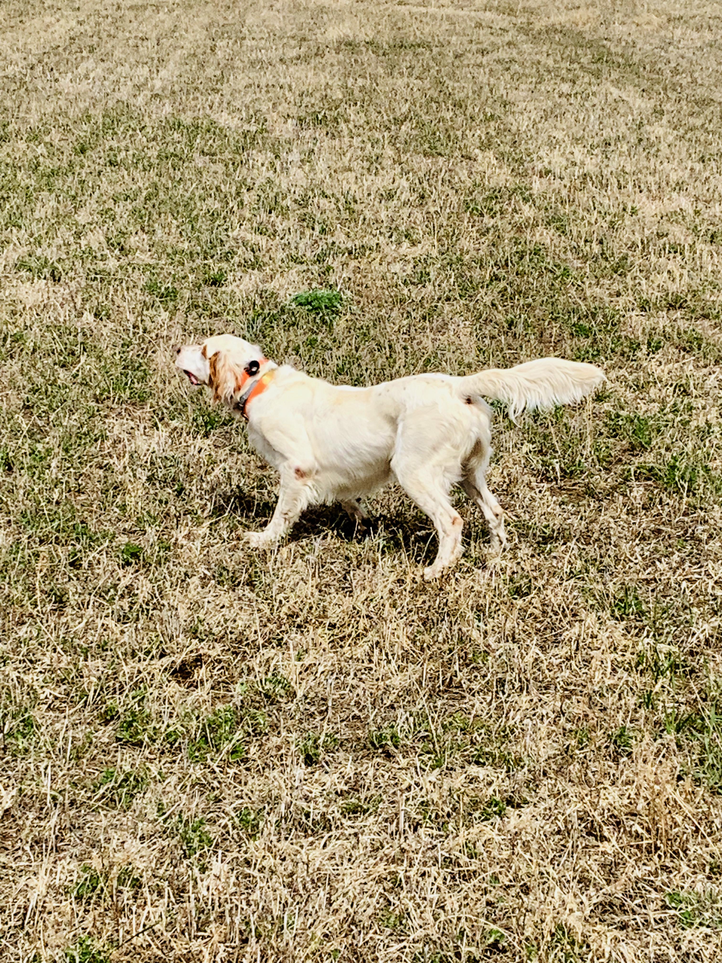 best hunting dog collars