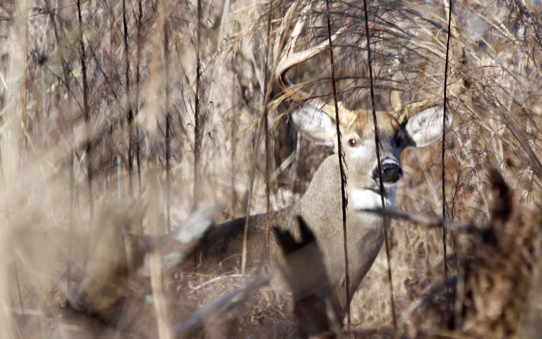 Late Season Bucks: Pulling Out All the Stops