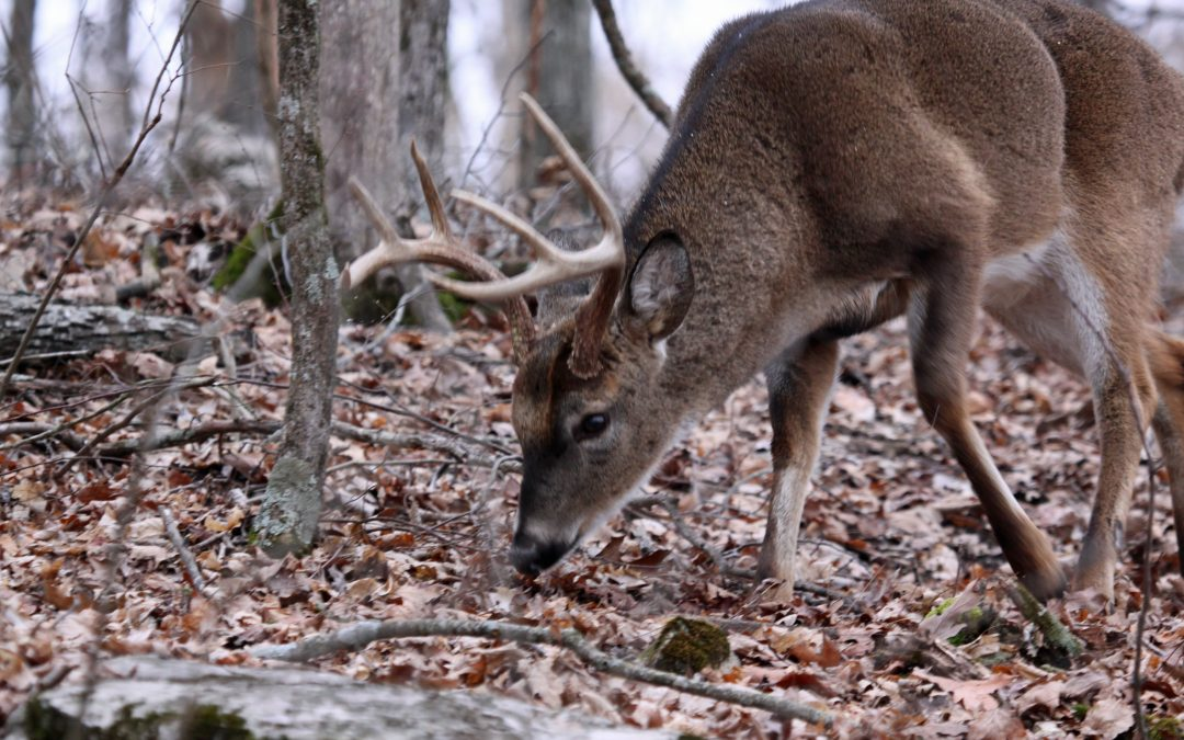 Whitetail Deer Behavior in Southern Weather