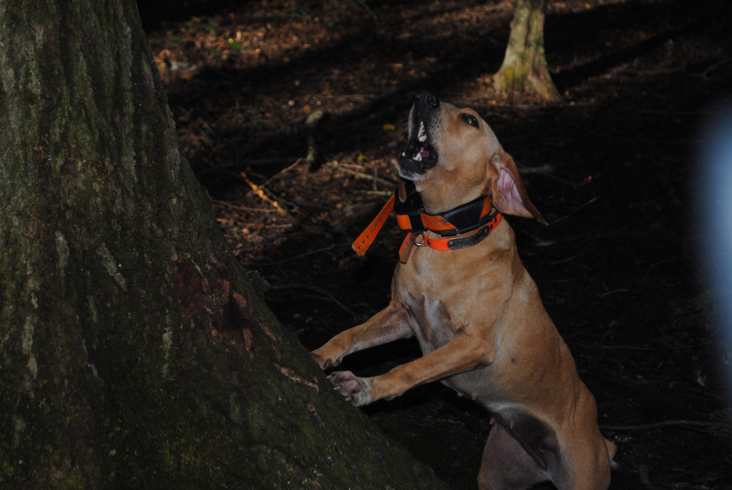 best squirrel dog breeds