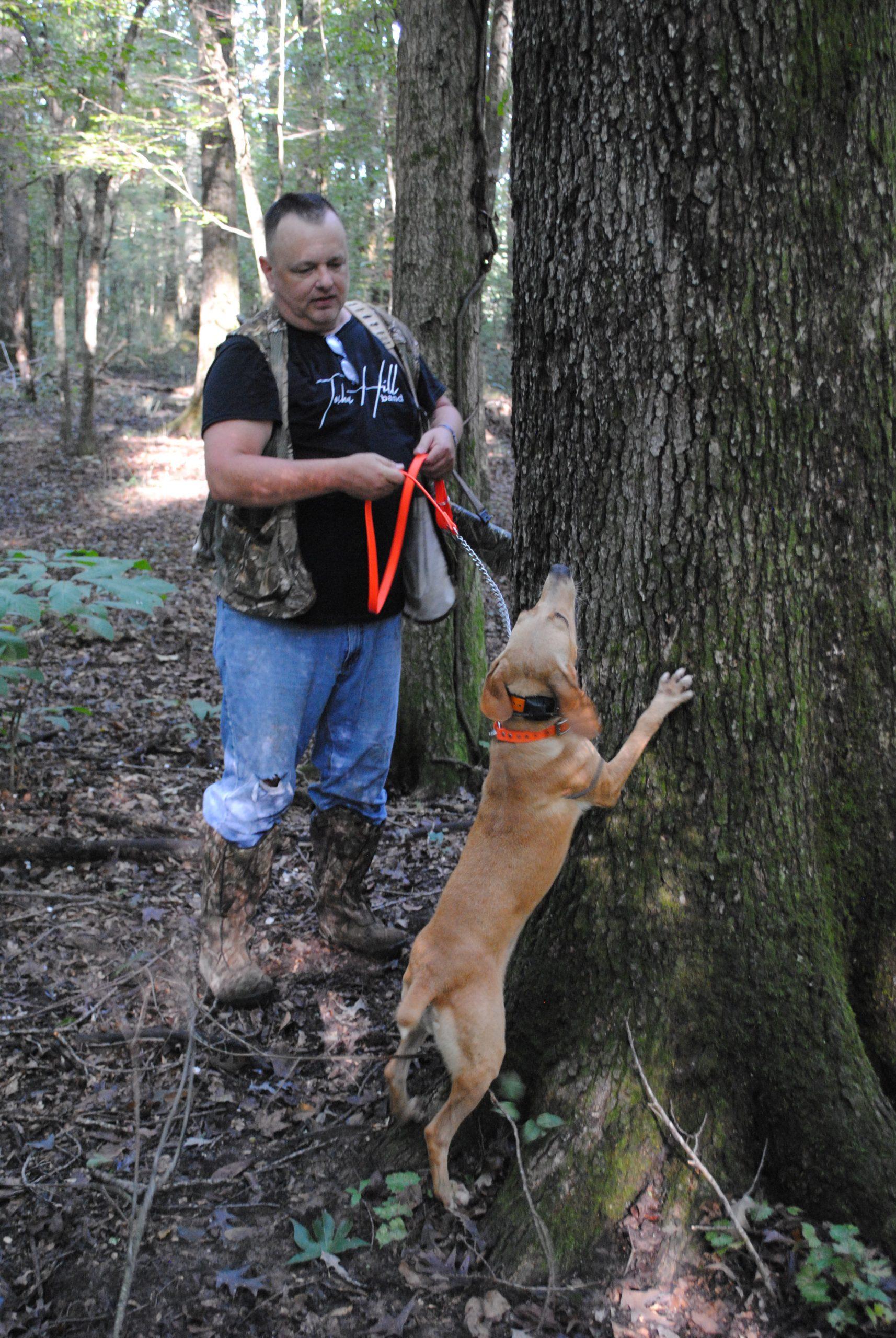 best squirrel dog